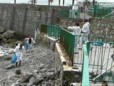 Volunteers at work in Little Bay